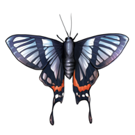 Papillon : le retour des beaux jours !