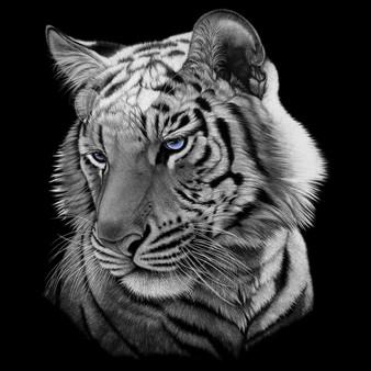 Tigerkik